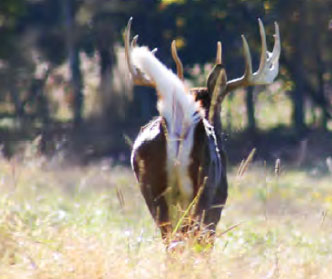 Guided Whitetail Deer Hunts