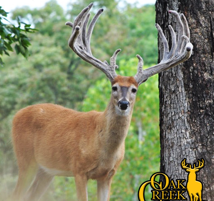 2017 Trail Cam Photos- Whitetails