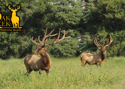 Whitetail deer hunts and outfitters. Oakc Creek, MO