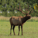 elk trophy hunts