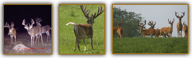 Trophy Archery Whitetail Hunting: It's all about two things: preparation and opportunities when you're hunting World Class Whitetails