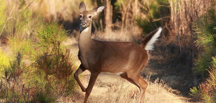 Deer Hunting at Oak Creek