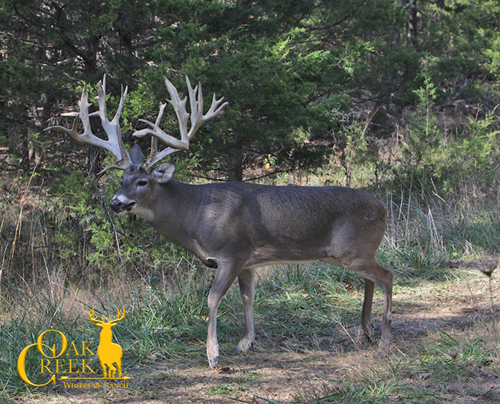 Learn How To Hunt Trophy Whitetail Deer
