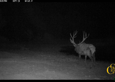 2017 Elk Trail Cam Photos