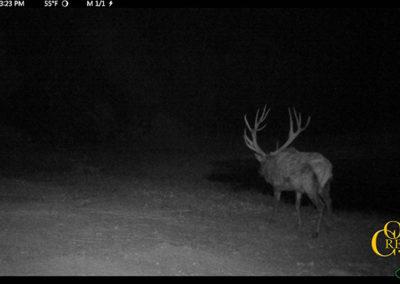 2017 Elk Trail Cam Photos