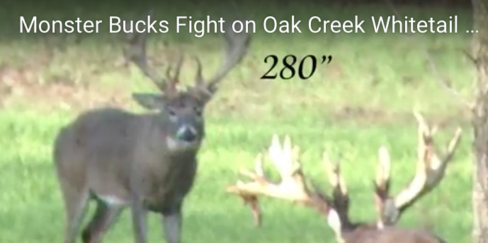Monster Buck Fight at Oak Creek
