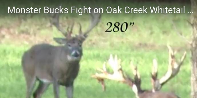 Monster Buck Fight at Oak Creek