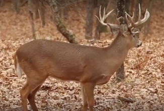 Ground Blind video from Oak Creek