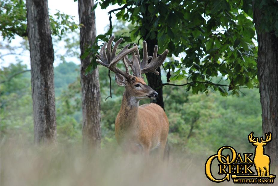 Hunt Trophy Northern Whitetail Deer At Oak Creek Whitetail