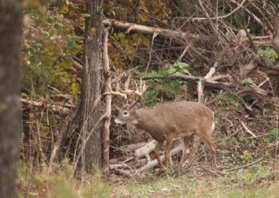 2019 Oak Creek Trail Cam Photos
