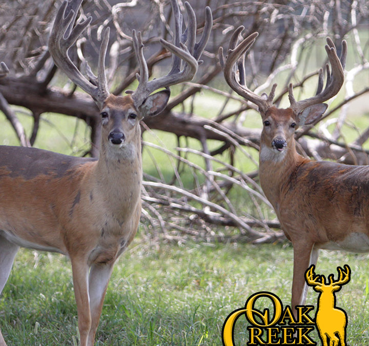 2018 Oak Creek Trail Cam Photos