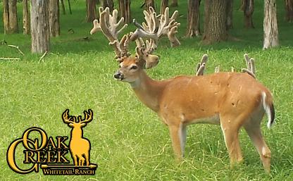 nontypical buck