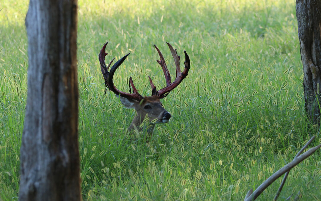 High Fence Deer Hunting – Finding the Best of All Worlds