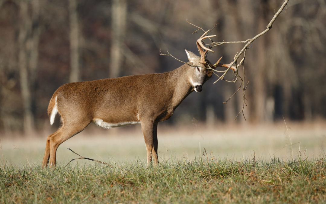 3 Deer Hunting Myths Debunked