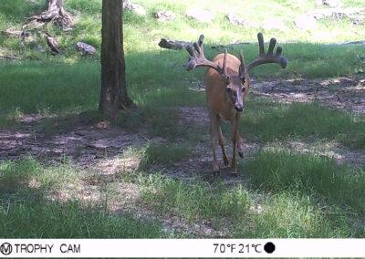 2020 Oak Creek Trail Cam Photos