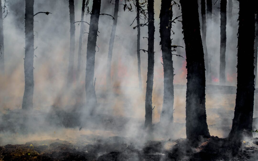 Wildfires and Whitetails